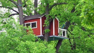 Trdhuset Hotell Hackspett r belget i Vasaparkens sttligaste ek i centrala Vsters, 13 meter upp och erbjuder en annorlunda bo-upplevelse.