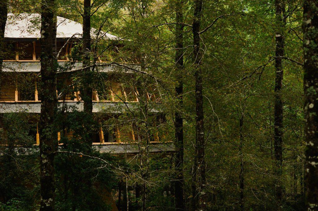 Lodge Reino Fungi