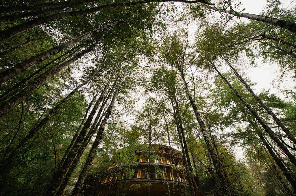 Huilo Huilo Hotel Reino Fungi